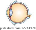 矢量 眼 眼睛 12744978