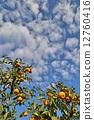 蜜柑 橘子 桔子 12760416