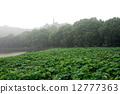 杭州西湖风光--保淑塔 12777363