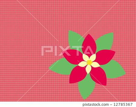 포인세티아 핑크 12785367