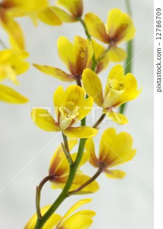 Yellow column 12786709