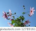 ดอกไม้ลอยขึ้นไปบนท้องฟ้าสีคราม 12789161