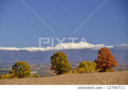 斯諾伊山和秋葉樹 12790711