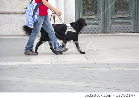 Guide dog is helping a blind man 12792147