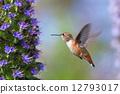 hummingbird, flowers, flower 12793017