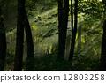woods, green, deep 12803258
