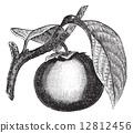 engraved, black, antique 12812456