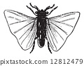 復古 直翅目 做雕刻 12812479
