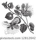 engraved, black, antique 12812642