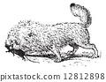 rat, engraving, vintage 12812898
