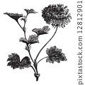 engraved, black, antique 12812901