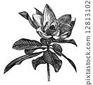 engraved, antique, ancient 12813102