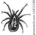 Red Mite or Dermanyssus gallinae, vintage engraving 12813186