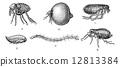engraved, ancient, antique 12813384