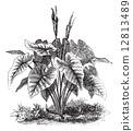 engraved, black, antique 12813489