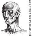 เหล้าองุ่น,แบบโบราณ,วินเทจ 12813829