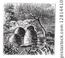 Lodges and dams built by beavers vintage engraving 12814410