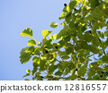 水果 樟脑树 樟木 12816557