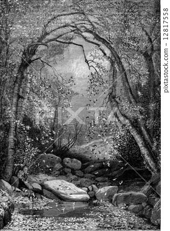 Sugar maples, vintage engraving. 12817558
