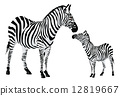 Zebra or Equus zebra, illustration 12819667