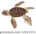 illustration, turtle, sea 12821251