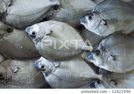 魚貨 12822096