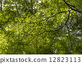 sunshine filtering through foliage, sunlight through the leaves, tree 12823113