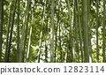 bamboo thicket, bamboo, soothing 12823114