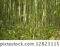 bamboo thicket, bamboo, soothing 12823115
