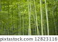 bamboo thicket, bamboo, soothing 12823116