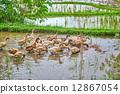 巴厘島 動物 農業 12867054