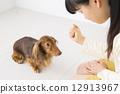 迷你臘腸犬 訓練 家規 12913967