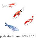 彩色鯉魚 12923773