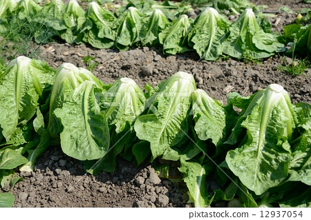 미국 농사 12937054