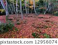 giou, temple, autumn 12956074