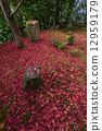 autumn, leaves, autumnal 12959179