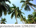 tropical, tree, outdoor 12962002