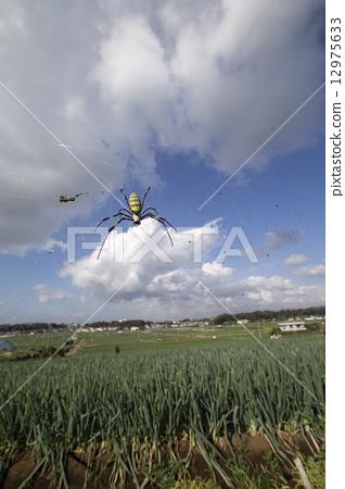 Joro gull and leek fields 12975633