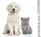 Cat and dog together 12979090
