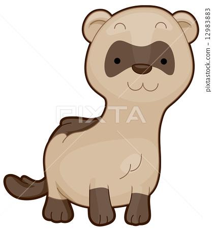 Cute Ferret 12983883