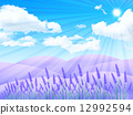 lavander, lavender, sky 12992594