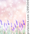 lavander, lavender, bloom 12995004