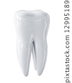 White tooth isolated 12995189