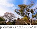 푸른, 하늘, 가을 12995230