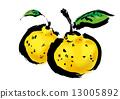 柚子(小柑橘類水果) 酸味物質 毛筆繪畫 13005892