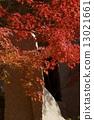 枫树枝 13021661