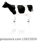 牛動物牲畜 13023939