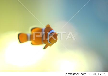 Clownfish Nemo 13031723