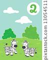 Two cute zebras 13054511