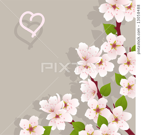 vector floral background with cherry flowers 13058488